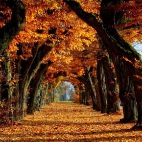 PCHC's Autumn 2016 Newsletter isOut!